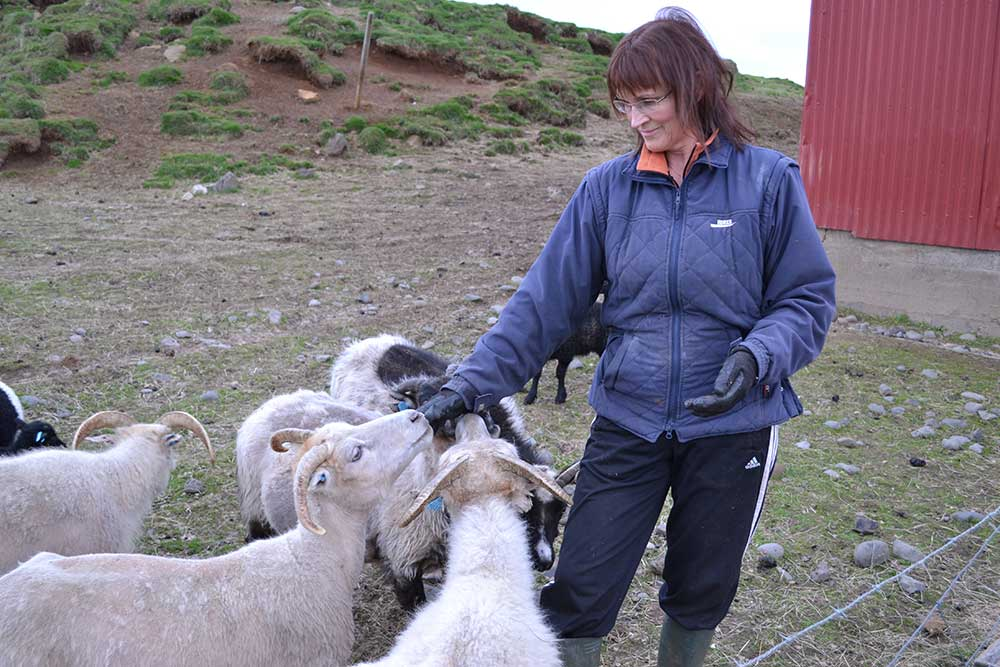 Svana with our sheep
