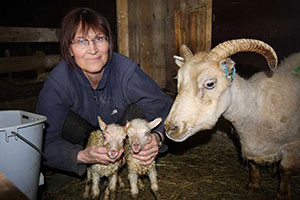 The owner Svana with the sheep mother and here two lambs